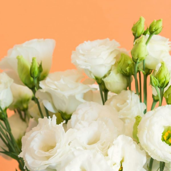 Beautiful white eustoma flowers bouquet on cantaloupe orange background. Trendy design background